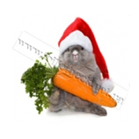 ПОДУШКУ ПОДАРЮ! Морковку не отдам!