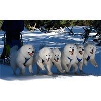 -20% на Катание на собачьих упряжках